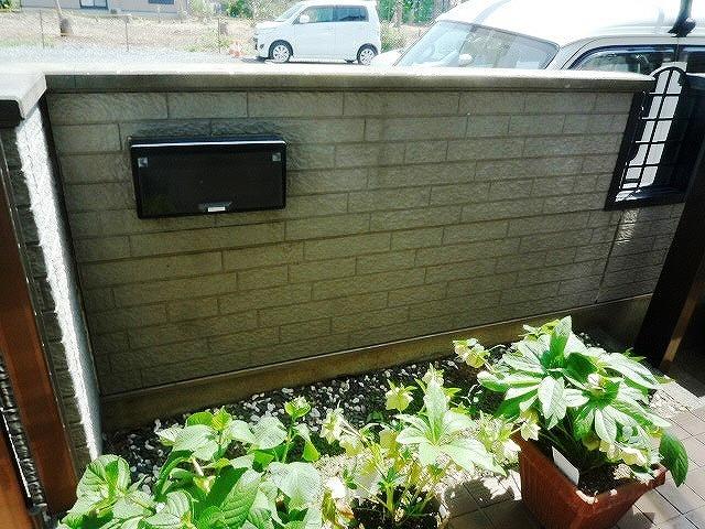 塀 苔の発生