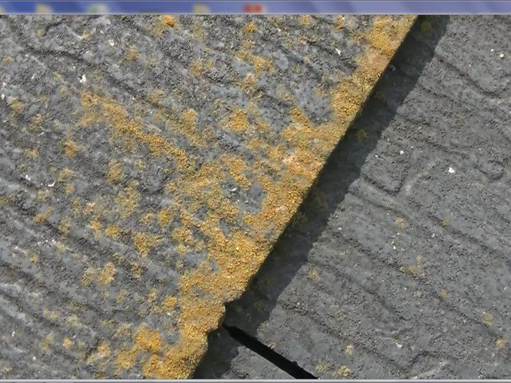 スレートが傷む際の特徴である苔の菌繁殖