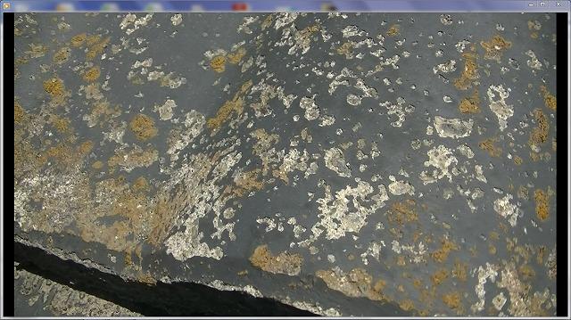 苔・カビの菌発生