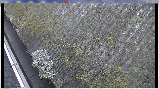 苔の発生 カビの発生