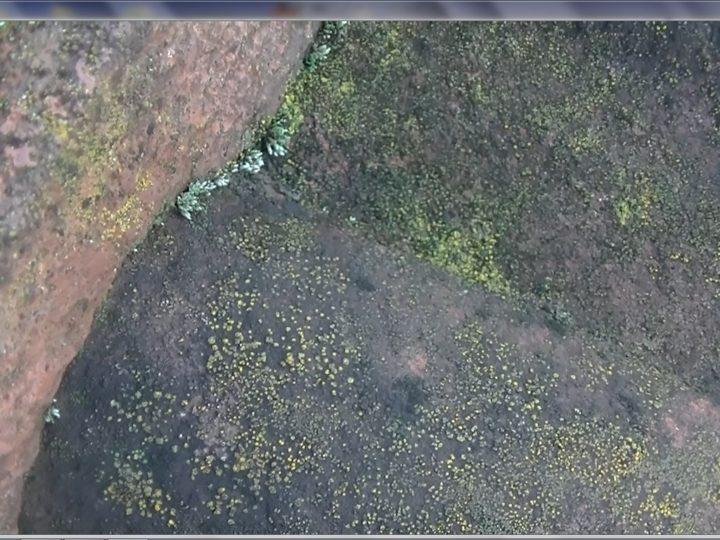 屋根乾式洋瓦苔菌繁殖